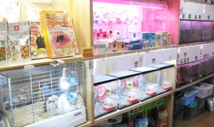 ジャンガリアンハムスターの購入(通販・ペットショップ)とお勧めの販売店情報